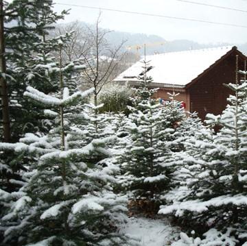 Geschichte Weihnachtsbaum.Weihnachtsbaum Kaufen Online Schweizer Wald Familie